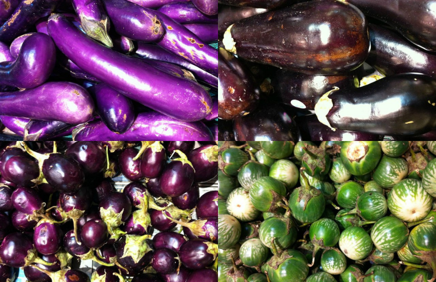 Different Types Of Eggplants And Recipes Oh Snap Let S Eat,Fried Dumplings Drawing
