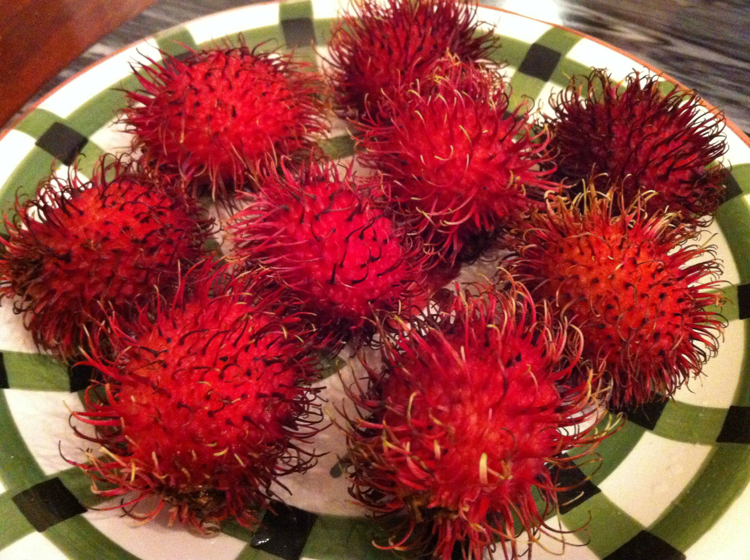 A Hairy Fruit: Rambutan • Oh Snap! Let's Eat!