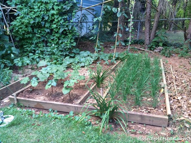 A Visit to an Organic Chinese Vegetable Garden