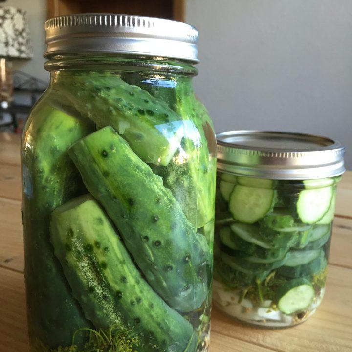 Kosher Refrigerator Dills Pickles (Paleo)