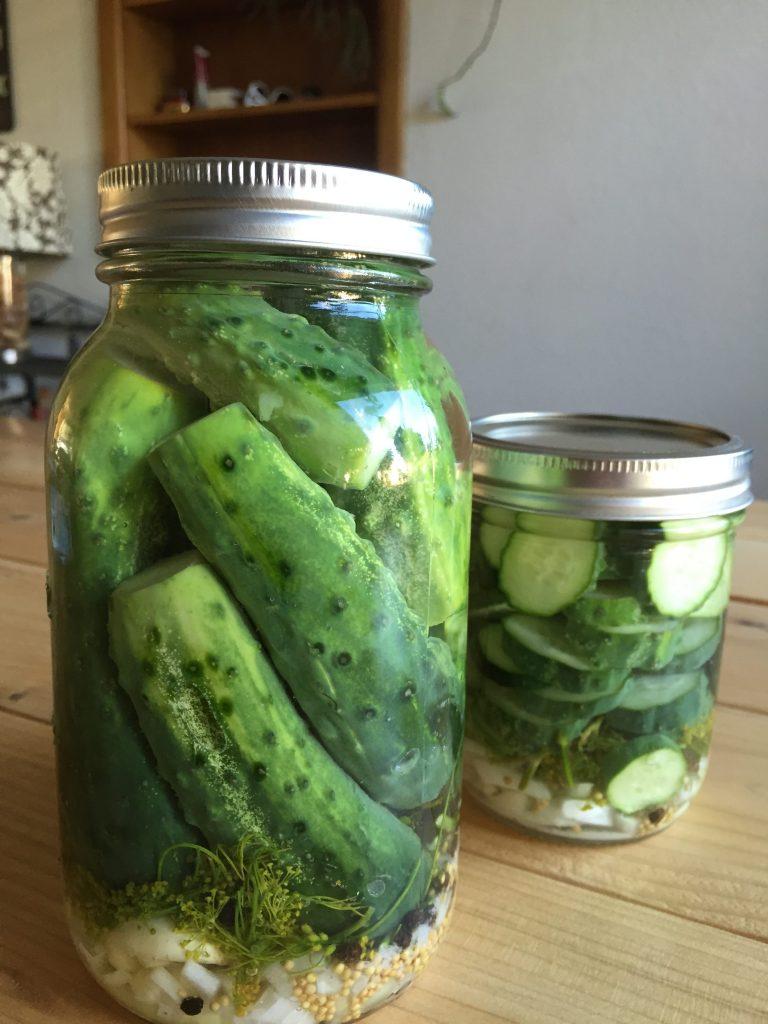 Harvest Season Part II:  Kosher Refrigerator Dills Pickles (Paleo)
