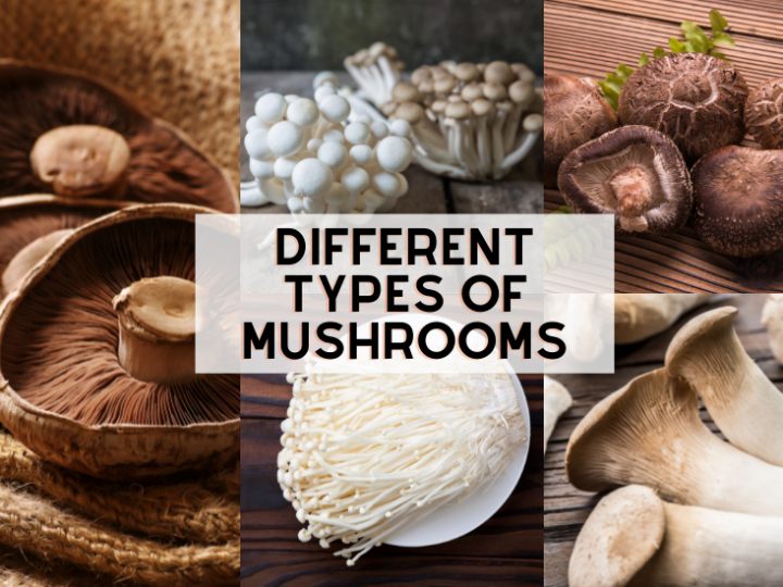 Different Types of Mushrooms (and Recipes!)